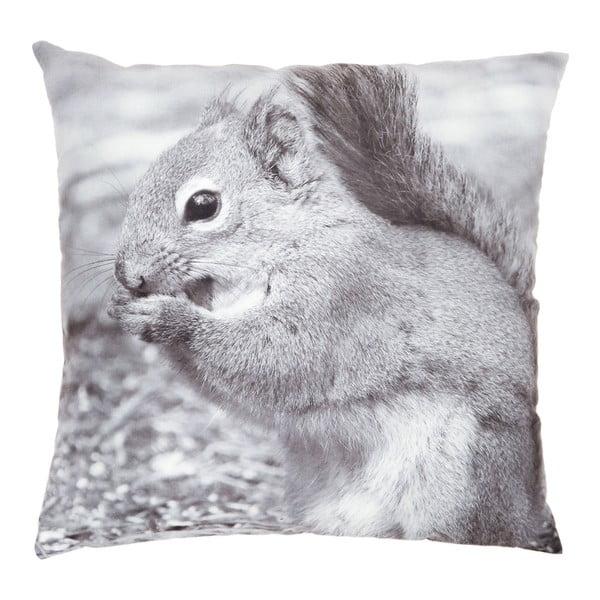 Poduszka Squirrel, 45x45 cm