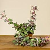 Roślina dekoracyjna Boltze