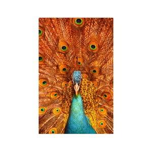 Obraz Paw, 45x70 cm