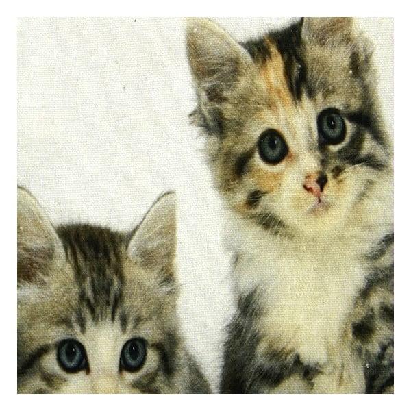 Poduszka Kittens 50x35 cm