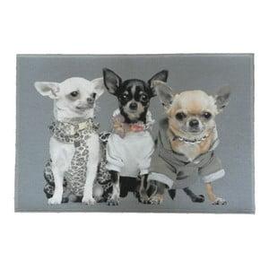 Dywanik Chihuahuas 75x50 cm