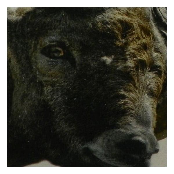 Poduszka Capricorn 50x50 cm