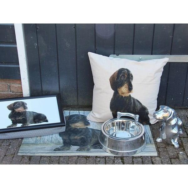 Poduszka Mars&More Dog, 50x50 cm