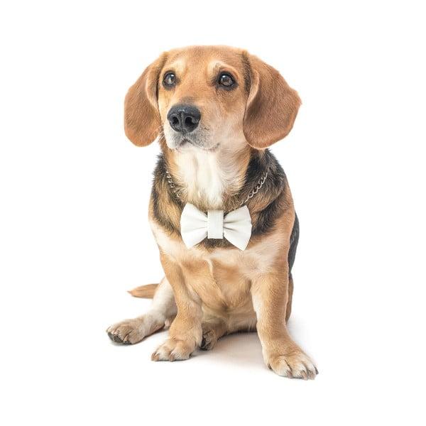 Mucha dla psa Funky Dog Bow Ties, roz. S, biała