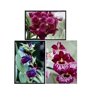 Zestaw 3 obrazów Orquideas