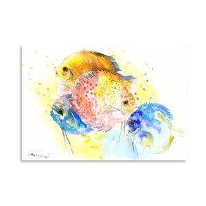 Plakat Discus Fish Rainbow
