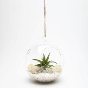 Terrarium z roślinami Globe