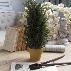 Drzewko dekoracyjne Cipresso