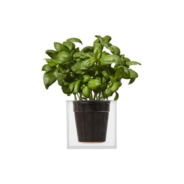 Doniczka nawadniająca rośliny Cube, duża
