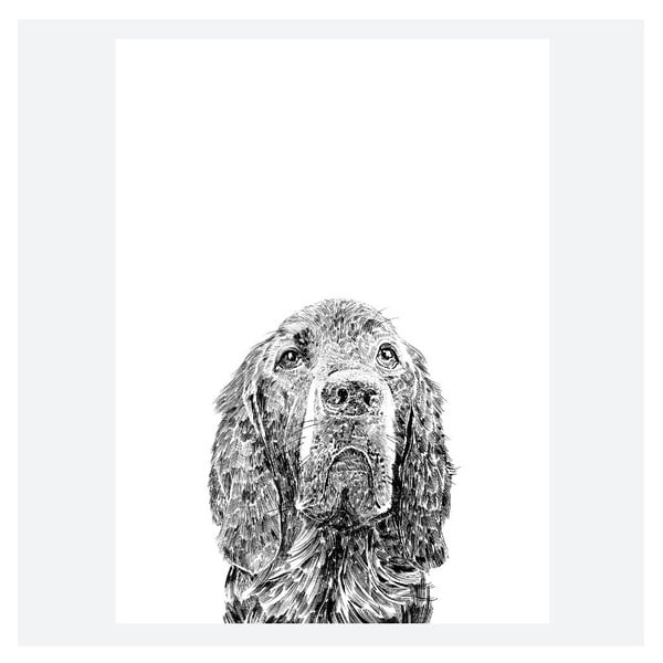 Plakat Woody the Red Setter, 30x40 cm