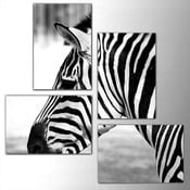 Czteroczęściowy obraz Zebra, 76x76 cm