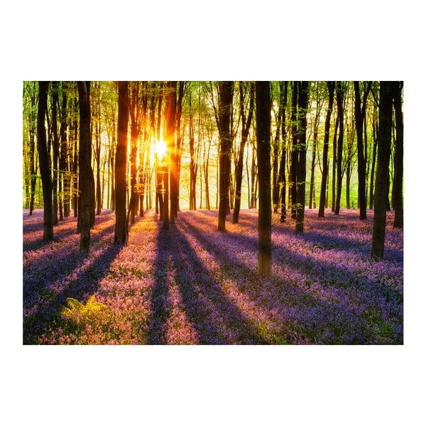 Wielkoformatowa tapeta Las o zachodzie słońca, 366x254 cm