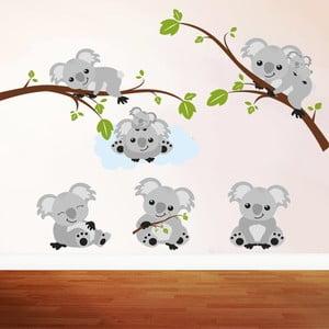 Naklejka ścienna Koala, 50x70 cm