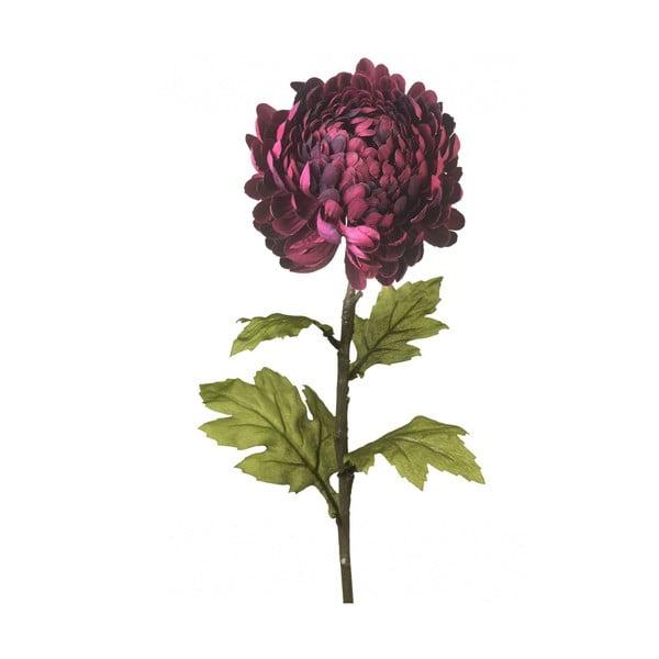 Chryzantema dekoracyjna Dark Purple