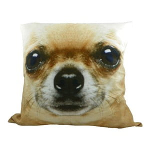 Poduszka Chihuahua Blond, 50x50 cm