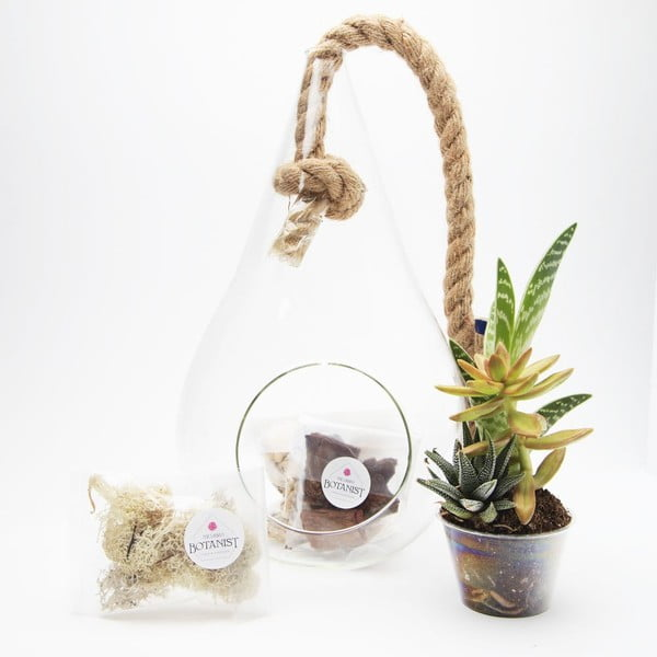 Terrarium z roślinami Pacific Tear Drop DIY