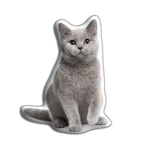 Poduszeczka Adorable Cushions Kot brytyjski krótkowłosy