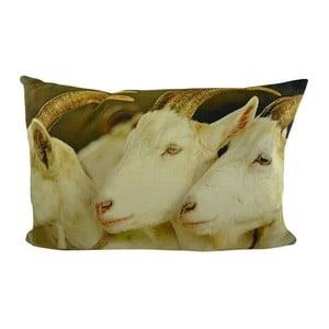 Poduszka White Goats 60x40 cm