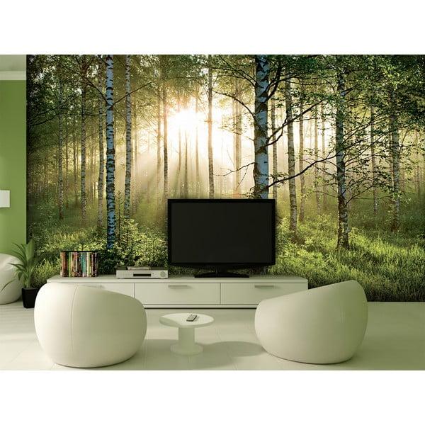 Tapeta wielkoformatowa W lesie, 366x254 cm