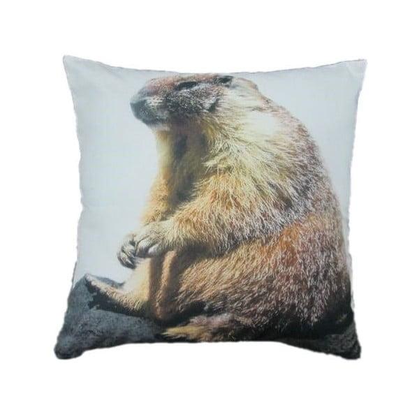 Poduszka Marmot 50x50 cm