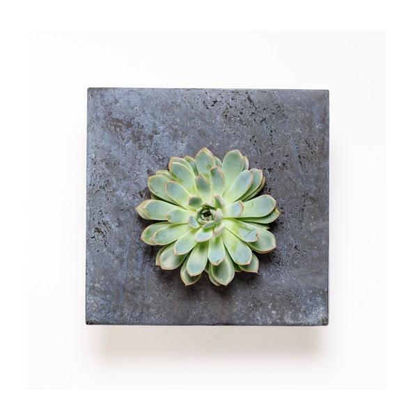 Doniczka naścienna z sukulentami Wall, 27x27 cm