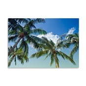 Plakat Palm Trees