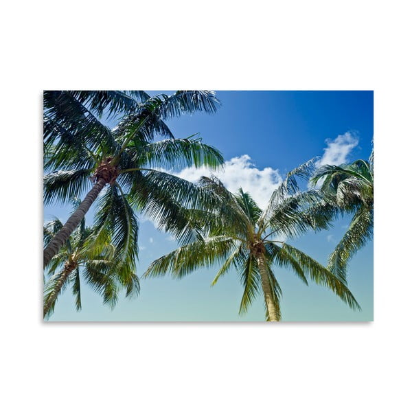 Plakat Palm Trees