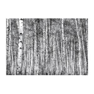 Fototapeta Eurographics Birch Forest
