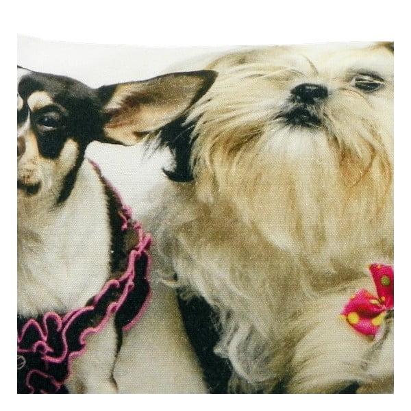 Poduszka Chihuahua Pink 50x35 cm