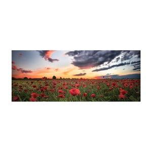 Obraz szklany DecoMalta Poppies, 125x50cm