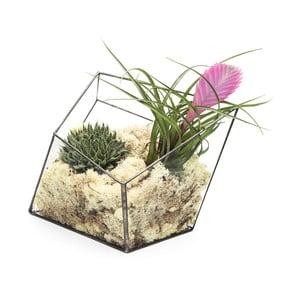 Terrarium z roślinami Super Aztec Diamond
