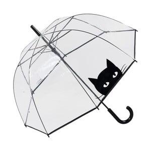 Parasol Looking Cat