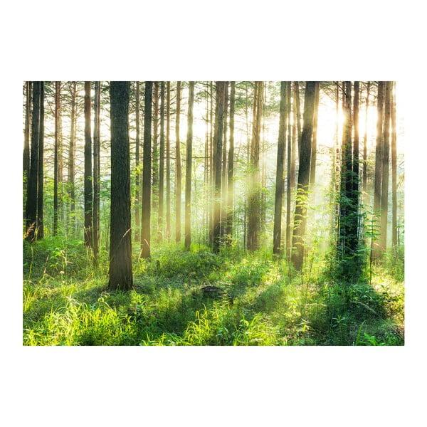 Wielkoformatowa tapeta Promienie słońca w lesie, 366x254 cm