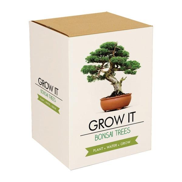 Zestaw do uprawy roślin Gift Republic Bonsai Trees