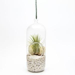 Terrarium z roślinami Cylinder