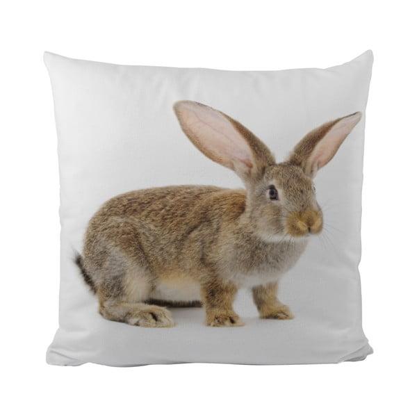Poduszka   This Bunny, 50x50 cm