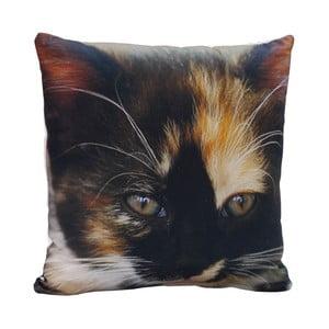 Poduszka Black Cat, 45x45 cm