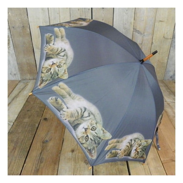 Parasol Tabby Laying