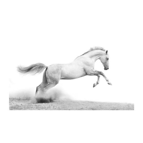 Obraz Dziki, 45x70 cm
