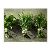 Obraz DecoMalta Herbs, 30x30cm
