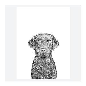Plakat Max the Labrador, 30x40 cm