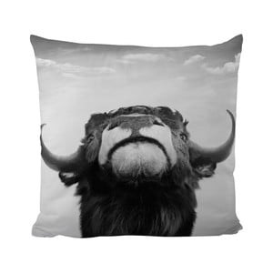 Poduszka Black Shake The Bull, 50x50 cm