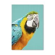 Plakat Tropic Parrot