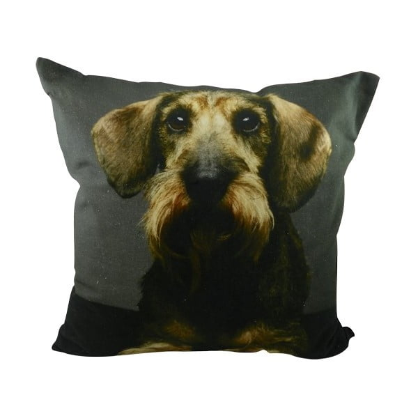 Poduszka Shaggy Dachshund with Mustache 50x50 cm