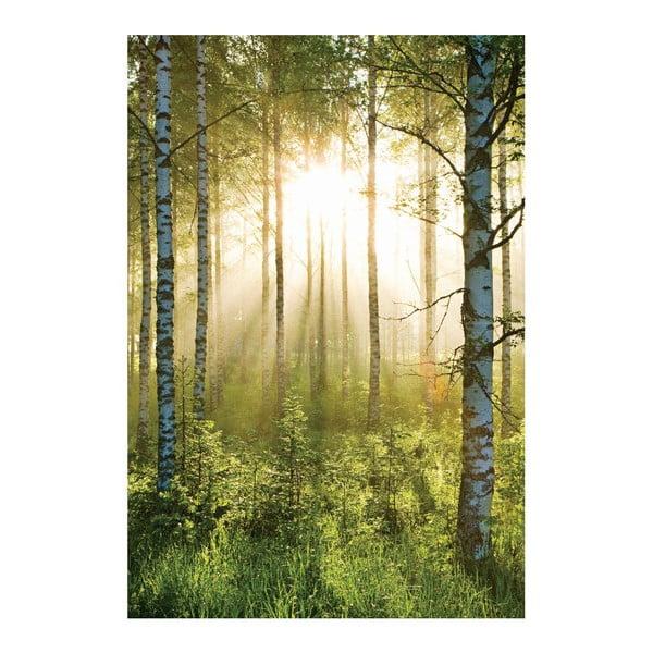 Tapeta wielkoformatowa Prześwitujący las, 158x232 cm