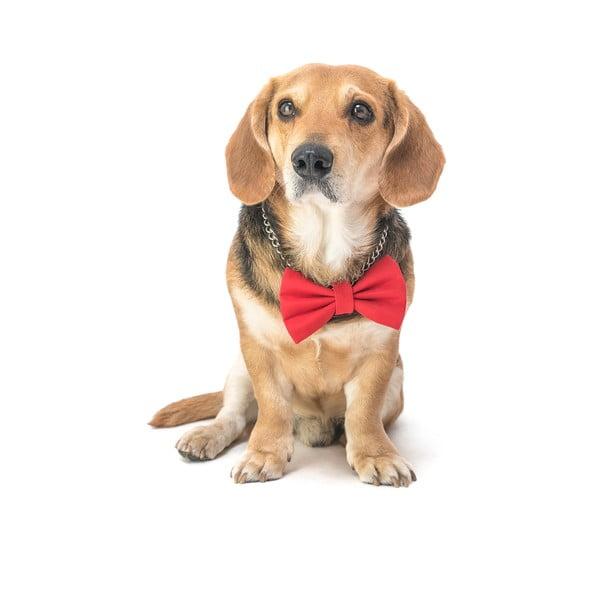 Mucha dla psa Funky Dog Bow Ties, roz. L, czerwona