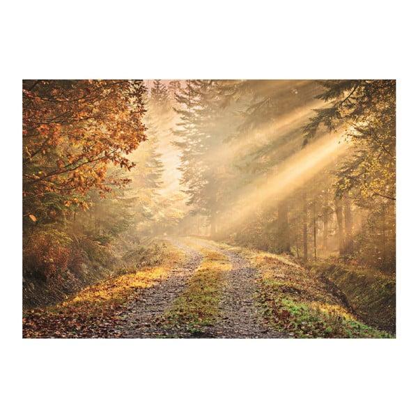 Tapeta wielkoformatowa Leśna ścieżka, 360x253 cm
