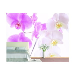 Fototapeta Graceful Orchids, 400x280 cm