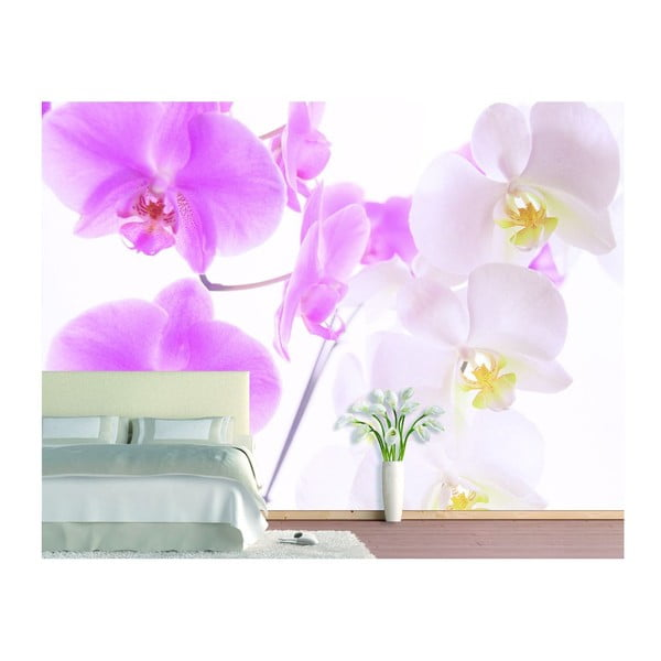 Fototapeta Graceful Orchids, 400x280 cm