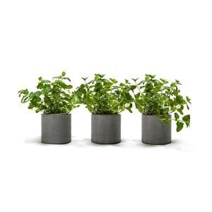 Zestaw 3 doniczek betonowych Spicepot 12